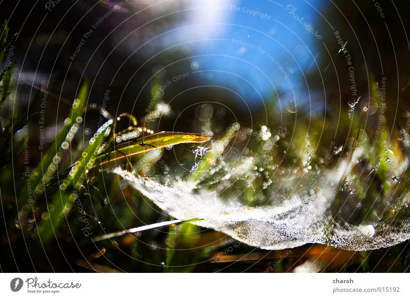 spider territory Environment Nature Landscape Plant Elements Earth Water Drops of water Sky Sunlight Autumn Beautiful weather Grass Meadow Network Blue Brown