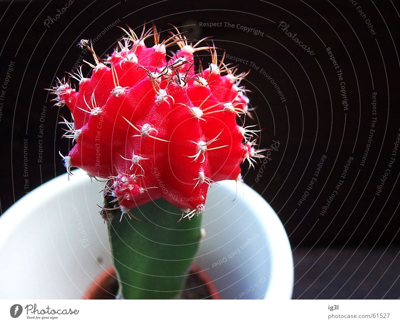 Water White Green Plant Red Loneliness Black Colour Life Dark Small Bright Earth Power Background picture Large