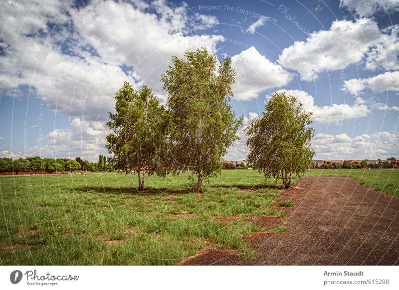 Three birches on the Tempelhofer Feld, Berlin Summer Nature Landscape Sky Clouds Beautiful weather Wind Tree Birch tree Park Meadow Town Deserted