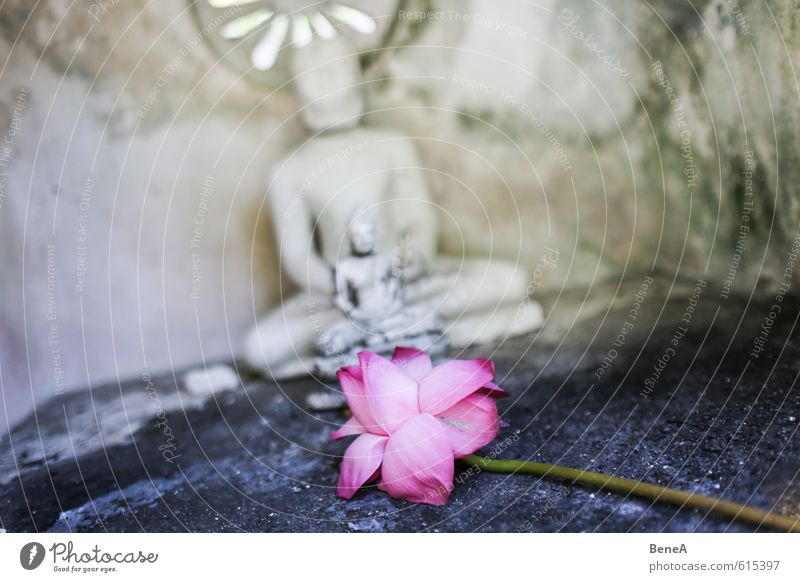 flower Work of art Sculpture Culture Flower Orchid Blossom Exotic Church Temple Far-off places Violet Pink Red Dedication Belief Religion and faith Contentment