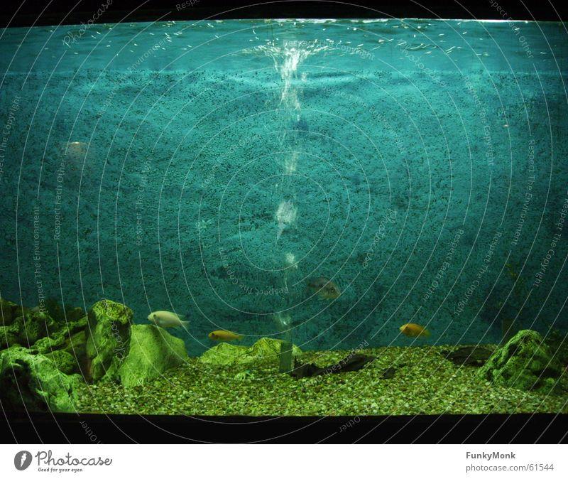 Water Loneliness Fish Zoo Aquarium Bubble