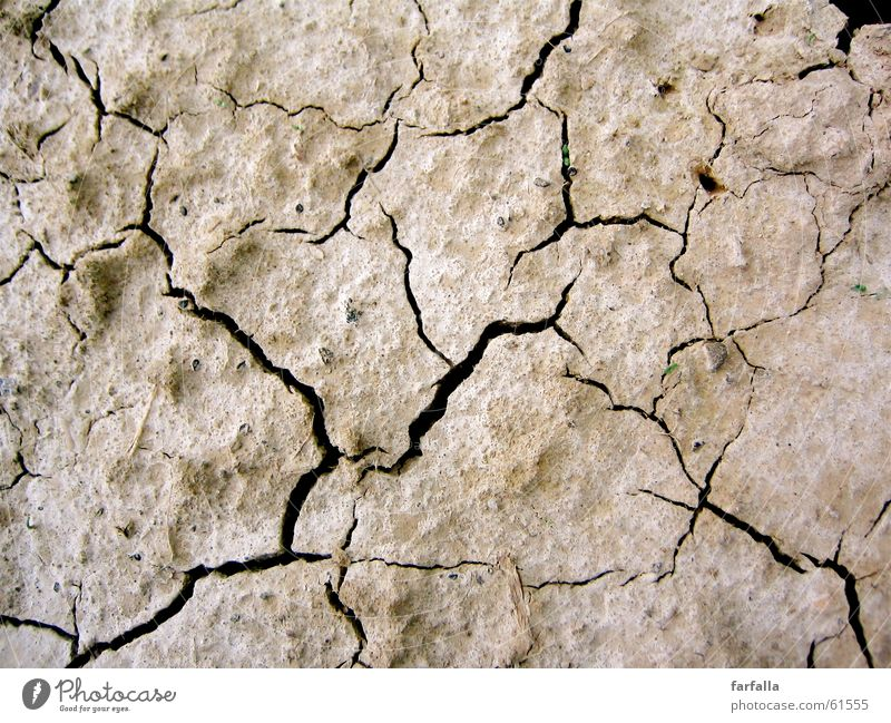 Brown Earth Ground Floor covering Division Dry Drought Indecisive