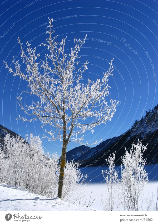 Sky Tree Blue Winter Snow Mountain Lake Ice Frost Crystal structure Federal State of Tyrol
