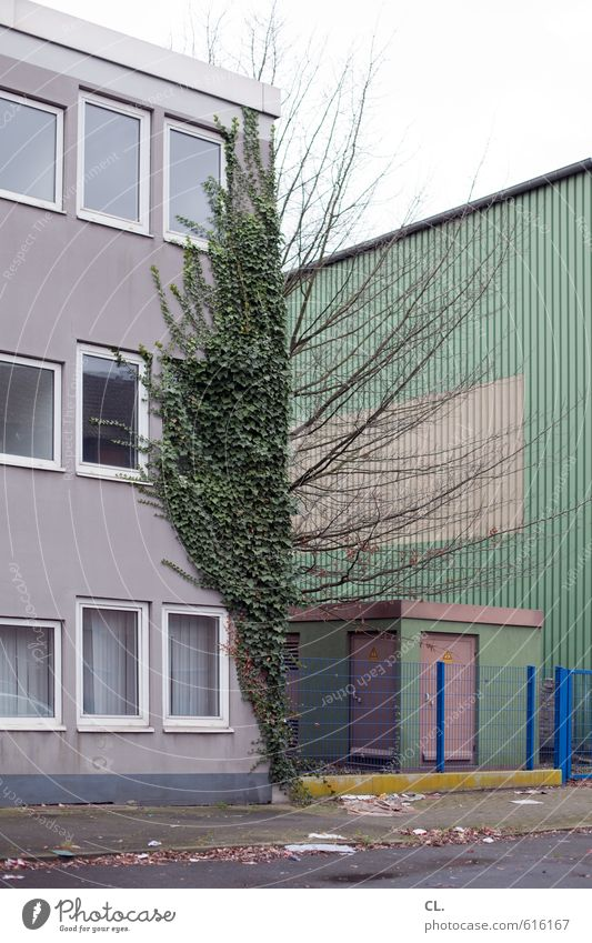somewhere between Autumn Winter Tree Ivy House (Residential Structure) Industrial plant Building Architecture Wall (barrier) Wall (building) Facade Window