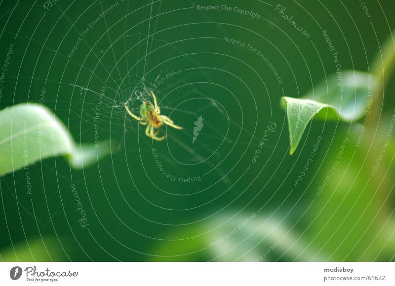 Green Leaf Animal Garden Network Catch Appetite Spider Woven