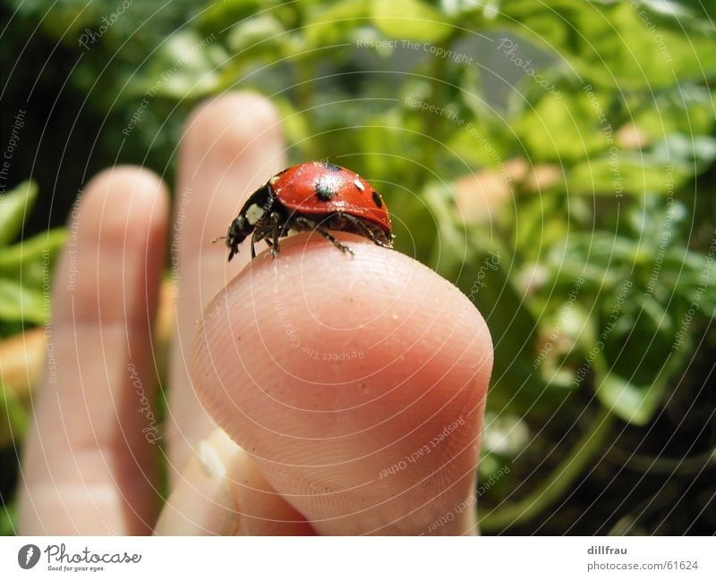 Green Summer Red Yellow Meadow Garden Contentment Fingers Round Point Vegetable Insect Still Life Safety (feeling of) Beetle Ladybird