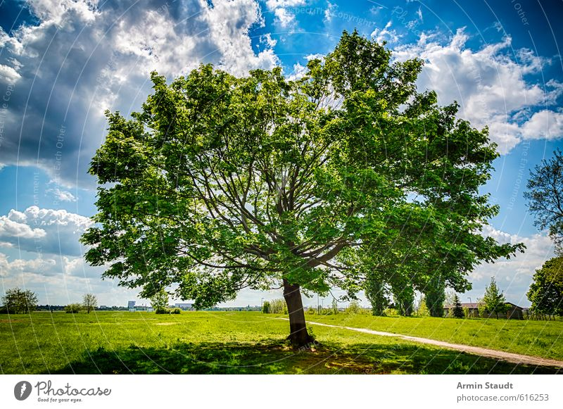Slate maple tree Nature Landscape Sky Clouds Sunlight Summer Wind Tree Maple tree Park Berlin Deserted Tourist Attraction Natural Blue Green Moody Spring fever