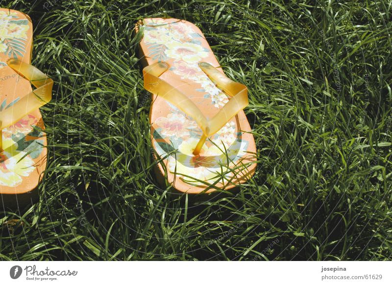 flip-flops Flip-flops Beach shoes Summer Grass Green Flower left Orange