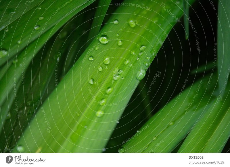 Nature Water Beautiful Green Meadow Grass Rain Landscape Drops of water Rope Blade of grass Rainwater