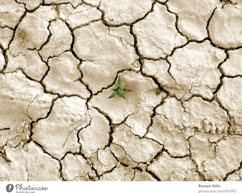 Last Survivor Beige Dry Plant Green Small Loneliness Exterior shot Desert single Crack & Rip & Tear Earth Floor covering Graffiti Bright