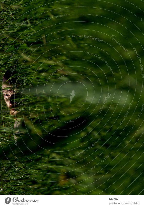 HIDING Grass Green Blur Meadow Evil Hide Eyes focus Focal point Nature Looking Lens