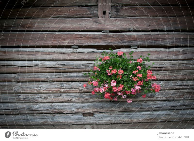 Old Beautiful Plant Relaxation Flower Wall (building) Wall (barrier) Wood Garden Brown Contentment Arrangement Decoration Esthetic To enjoy Creativity