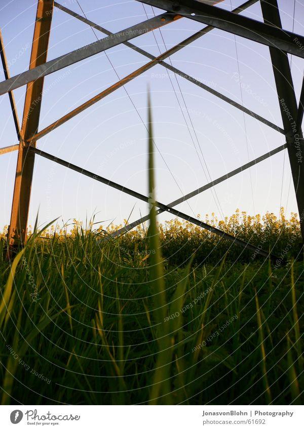 Sky Blue Sun Grass Electricity pylon Canola Blue sky