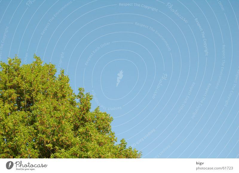 Leaf corner #1 Green Comforting Tree Blue Sky