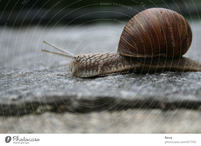 House (Residential Structure) Animal Gray Brown Small Round Floor covering Snail Slowly Vineyard