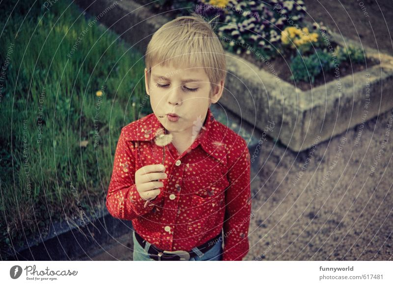 puuust puuust puuust! Boy (child) Infancy 8 - 13 years Child Retro Dandelion Red Seventies Grave Death Life Colour photo Exterior shot Copy Space right