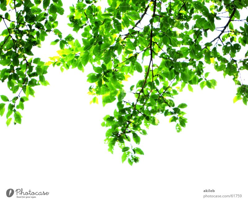 Nature White Tree Green Leaf Spring Hope Branch Full