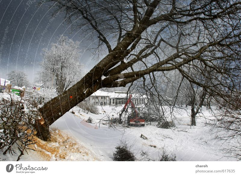 Tree falls Environment Nature Landscape Sky Winter Ice Frost Snow Snowfall Park Small Town To fall Cold Blue Gray Black White Environmental protection