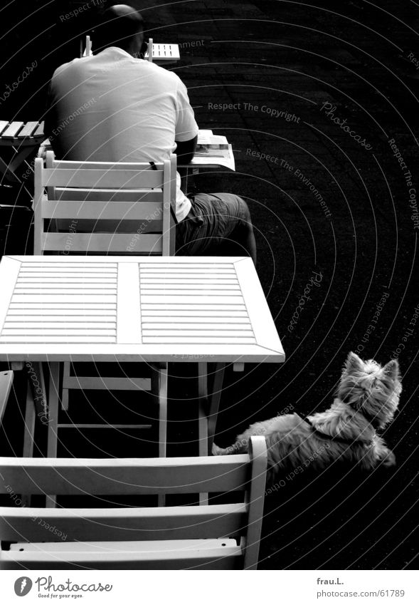 street cafe Man Reading Newspaper Dog Café Hard Table Sidewalk café Morning Gastronomy Mammal Chair Back Street Contrast