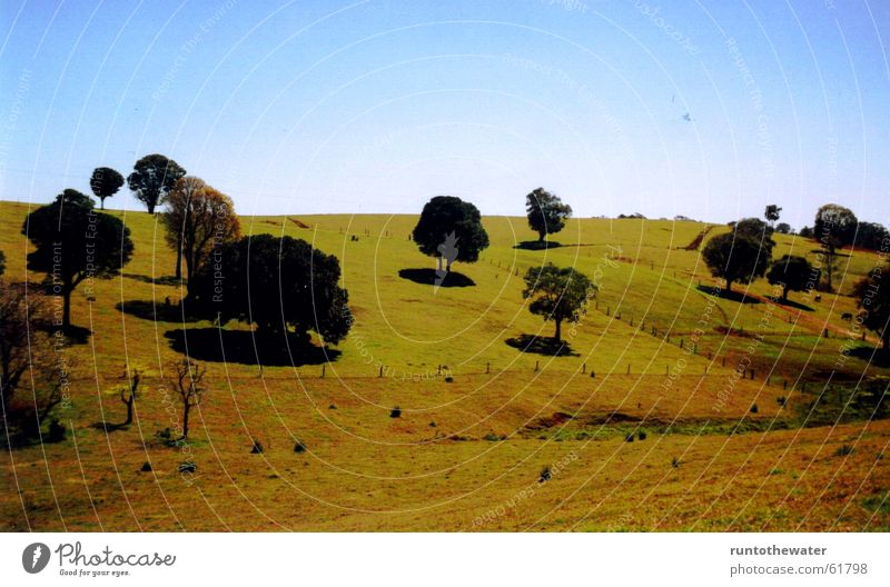 on the way Tree Field Australia Meadow Longing Vantage point Stop Sky Freedom Nature Landscape Uniqueness Snapshot