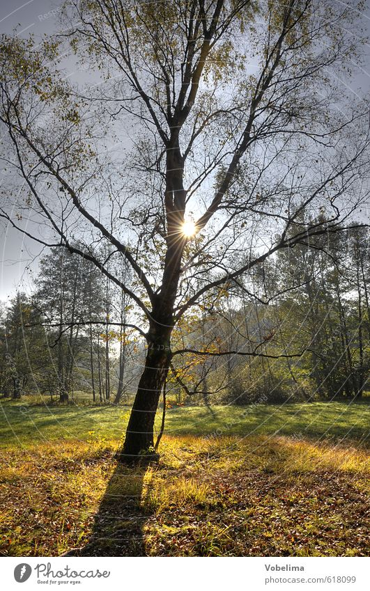 Tree in backlight Nature Landscape Sun Sunlight Autumn Forest Colour photo Exterior shot Copy Space bottom Day Light Contrast Silhouette