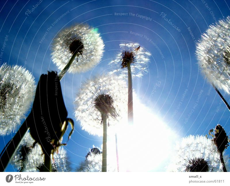 The sun 2 Light Blue sky Jump dandelion joy flower