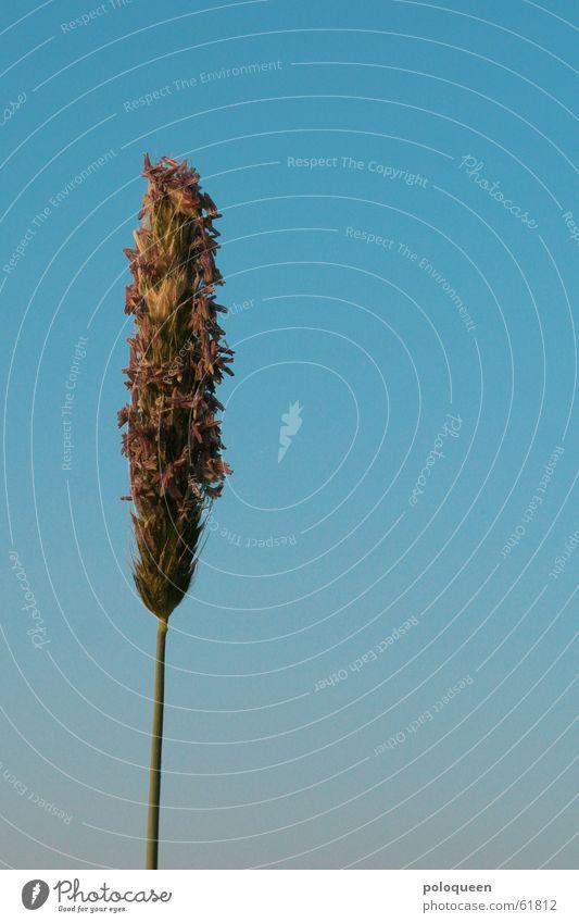 Sky Green Blue Plant Summer Meadow Grass Dusk Faded