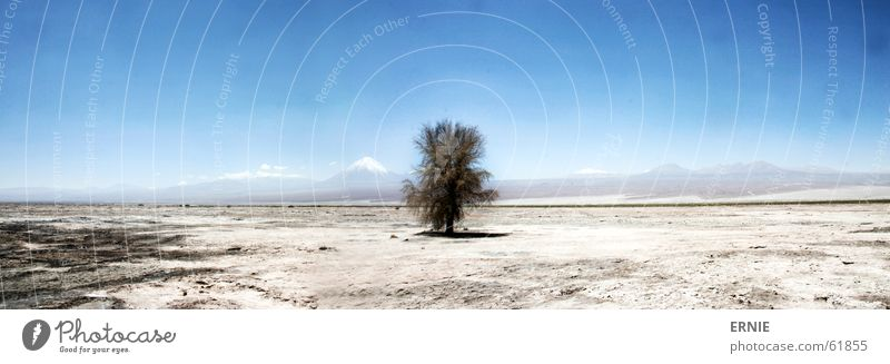 Sky Tree Blue Vacation & Travel Mountain Sand Large Desert Hot Dry Panorama (Format) Volcano Chile Salar de Atacama San Pedro de Atacama