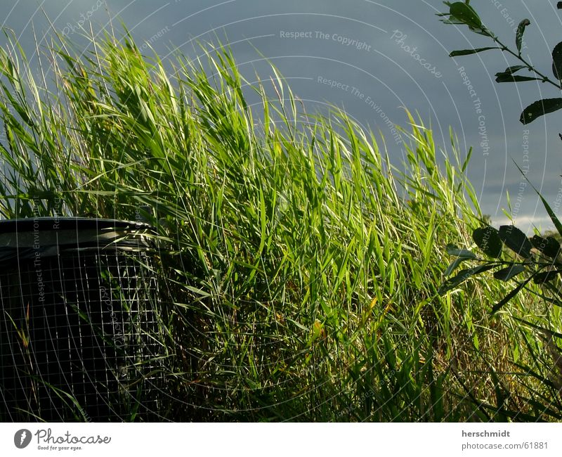 Green garbage can Trash container Grass Bushes Clouds Dark Leaf Keg solar irradiation Contrast