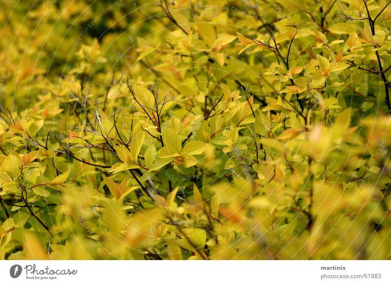 Et jrünt so jrün ... Green Yellow Bushes Depth of field Spring Sprout