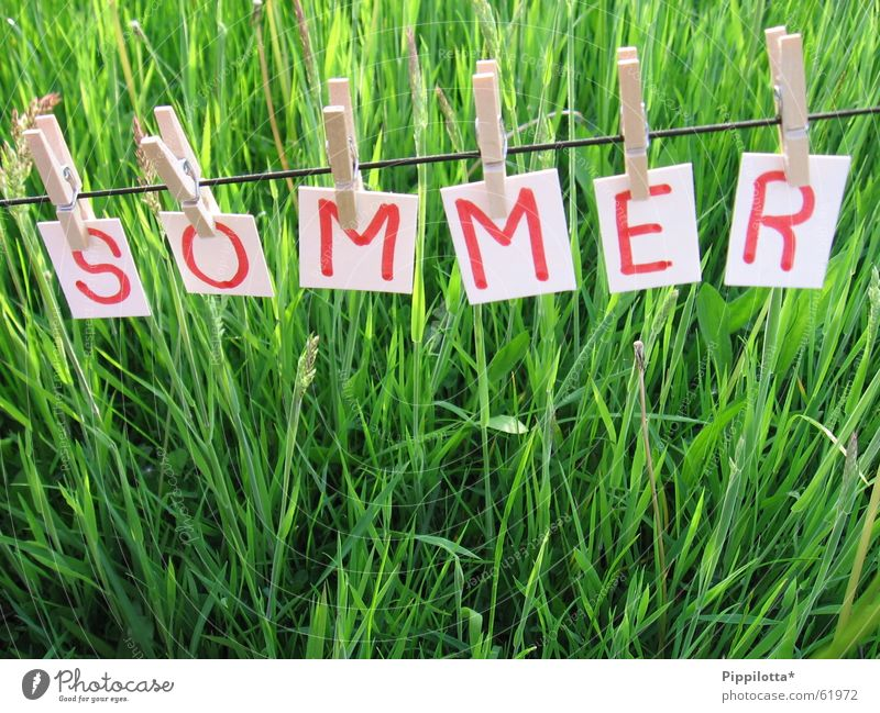 Summer ll Letters (alphabet) Grass Clothesline Meadow Seasons Happiness Good mood Beautiful Small Green Physics Rope To hold on Free Joy Characters Lawn Warmth