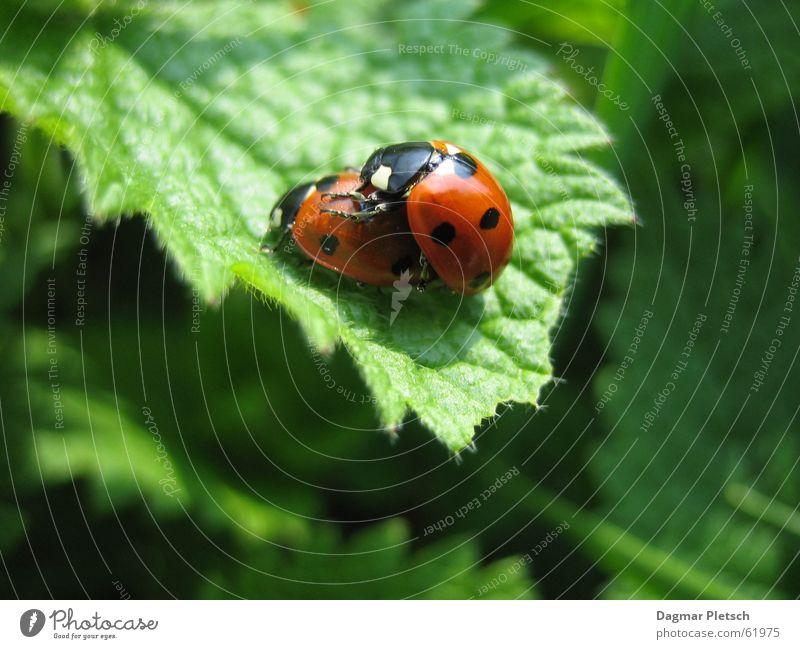 ladybugs Spring Ladybird Summer Beetle Happy