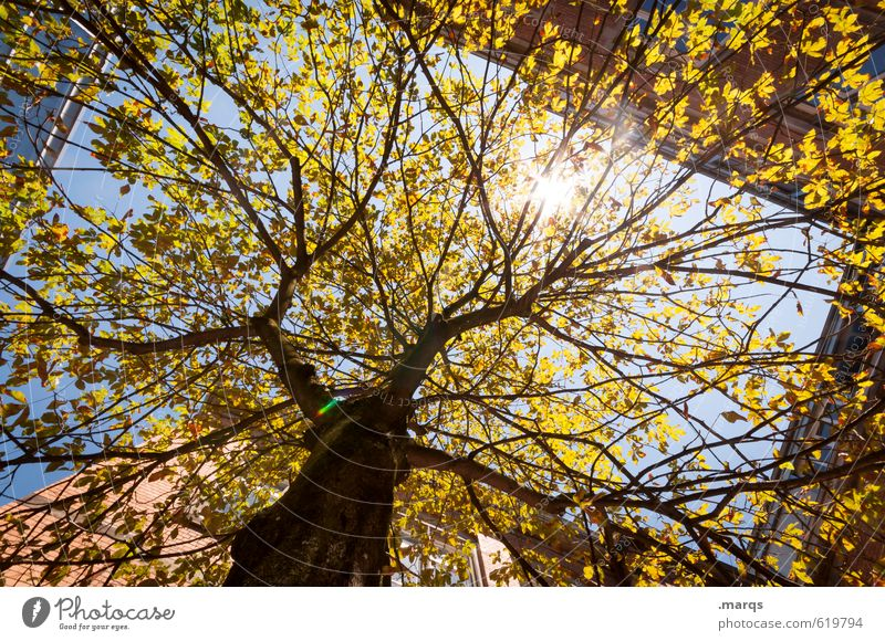 sun Environment Nature Cloudless sky Sun Climate Beautiful weather Tree Deciduous tree Tree trunk Building Growth Healthy Gigantic Bright Warmth Moody Skyward