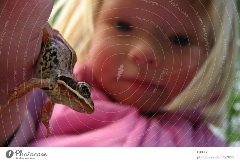 Child Nature Girl Eyes Animal Playing To hold on Discover Frog Fairy tale Marvel Princess Comprehend Frog Prince Children's eyes