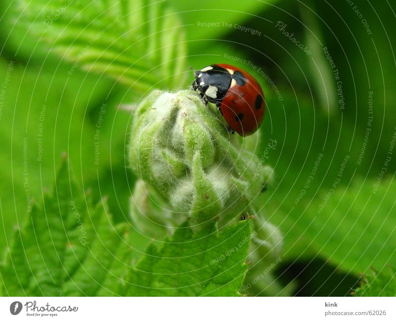 Nature Flower Green Red Animal Blossom Grass Ladybird Beetle