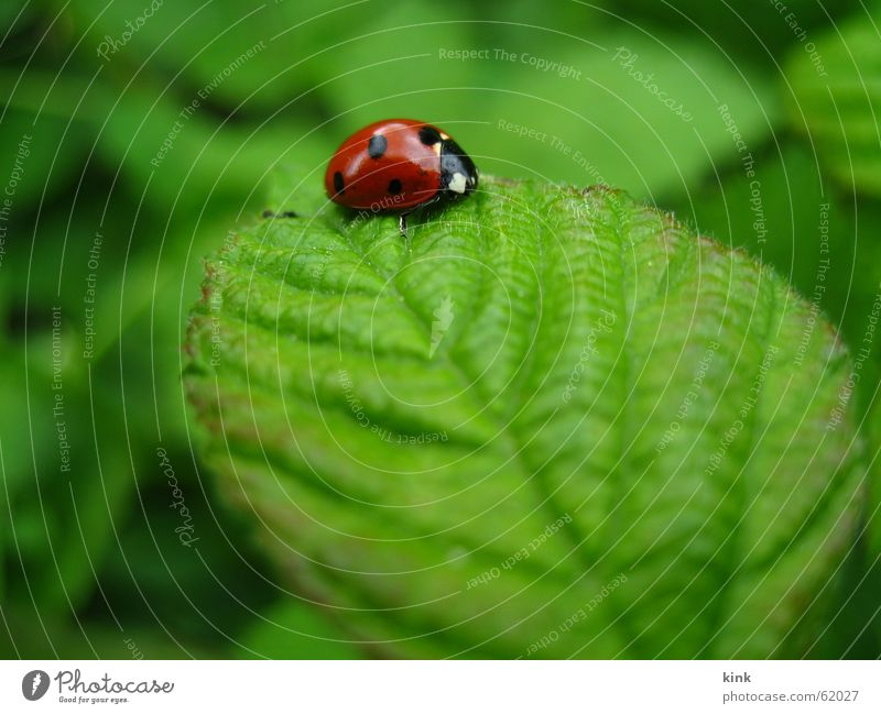 Nature Flower Green Red Leaf Animal Grass Ladybird Beetle