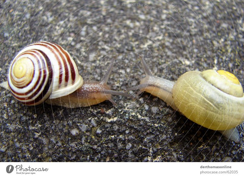 House (Residential Structure) Eyes Near Smoothness Snail Crawl Slowly Stone floor