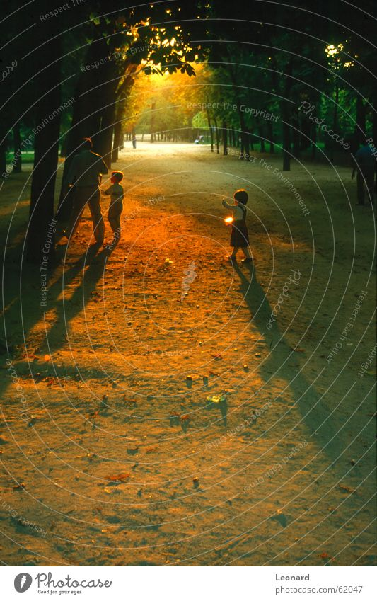 Sunset in the park Park Human being Tree Family & Relations Child Girl Light (Natural Phenomenon) Shadow sunset at the sunset Gold shade sun sunset