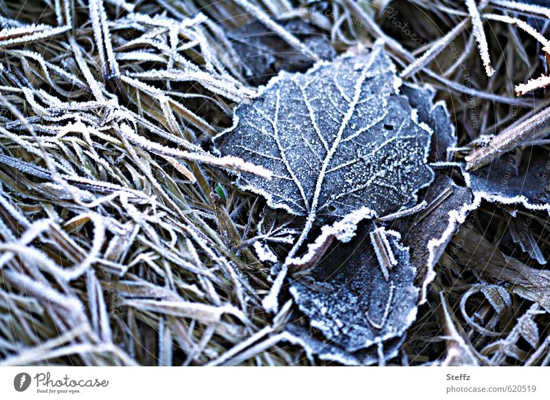 First frost Hoar frost Cold shock cold snap Nordic Nordic cold Domestic onset of winter frosty Frost winter cold Freeze Gloomy Winter mood Nostalgia chill