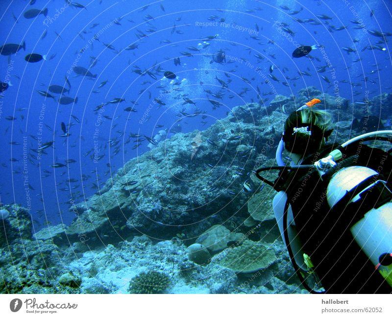Woman Water Ocean Fish Dive Maldives Aquatics Diver Reef