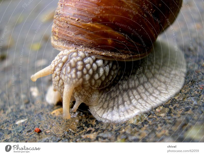 escargot Crawl Slowly Mucus House (Residential Structure) Snail shell Goggle eyed Speed Bowl