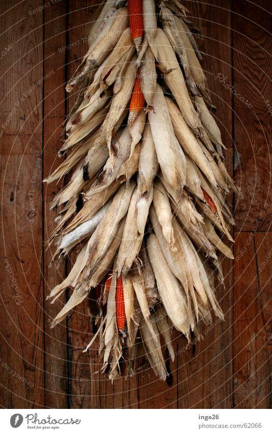 corn bundle Wall (building) Wood Dry Italy Polenta Maize Bundle Nature Vegetable