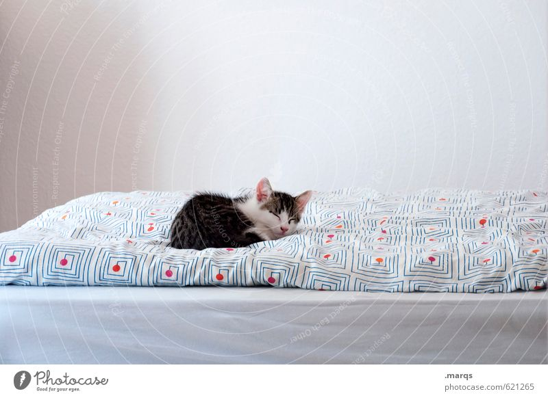 Kalle sleeps in. Flat (apartment) Bed Animal Pet Cat 1 Relaxation Lie Sleep Bright Small Beautiful Safety (feeling of) Comfortable Contentment Calm Cute