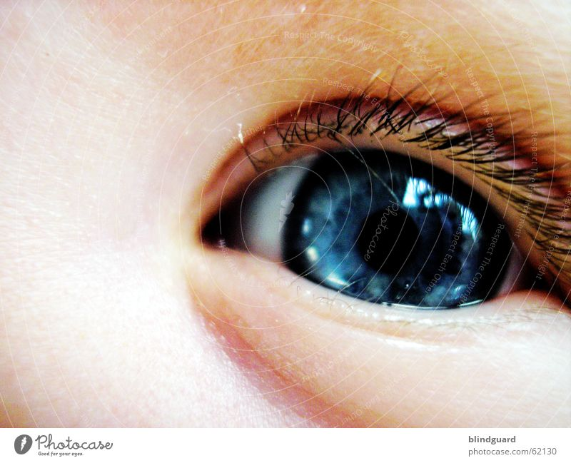 Child Blue Joy Eyes Life Emotions Dream Think Baby Glittering Large Trust Curiosity Toddler Eyelash Birth