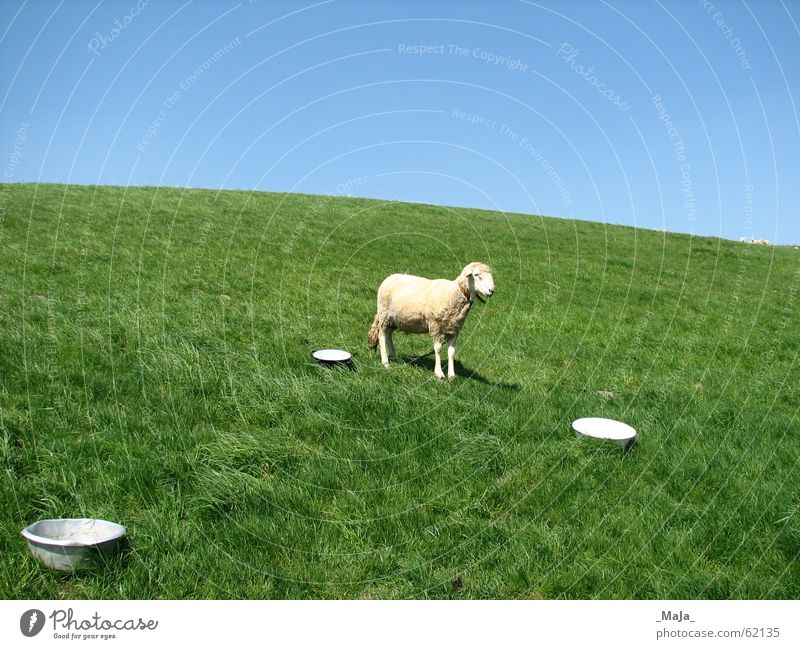 Nature Sky Green Blue Meadow Grass Pasture Sheep Bowl