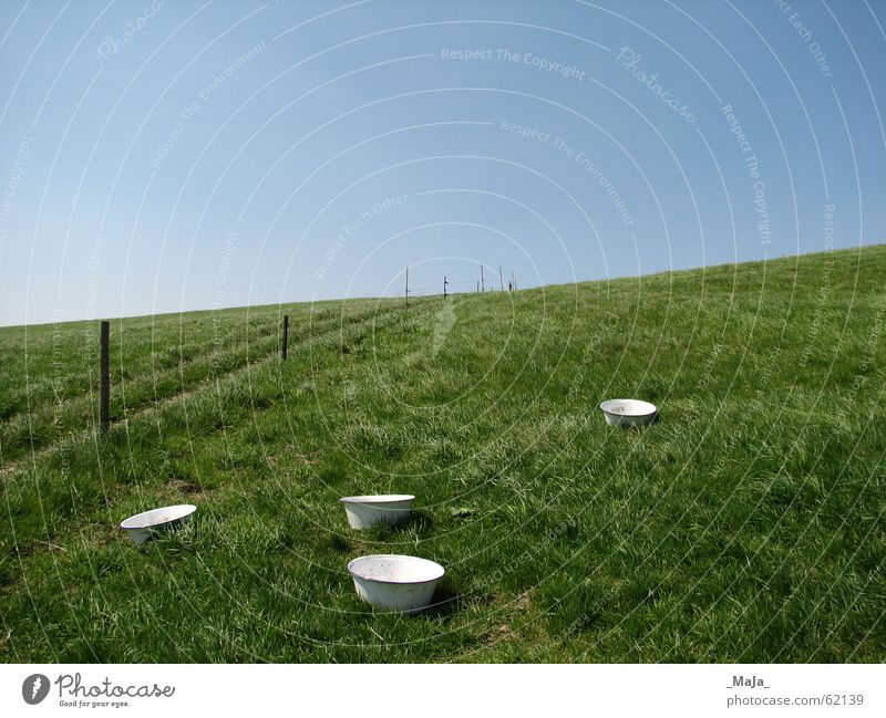 pasture Grass Green Fence Pasture Blue Sky Bowl Nature