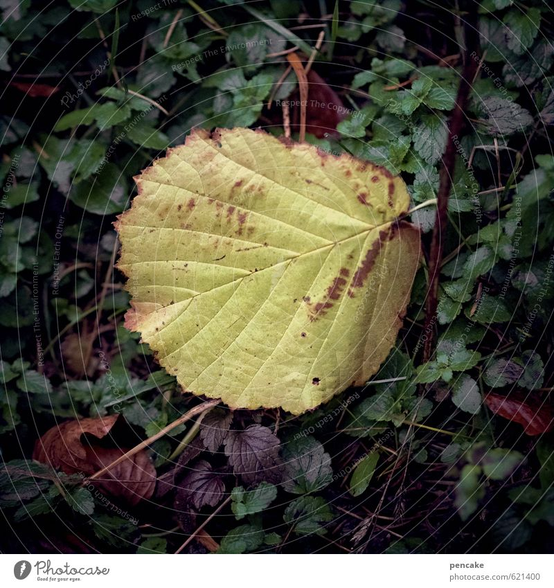 haselblad Nature Elements Earth Autumn Leaf Sign Senior citizen Loneliness Uniqueness End Transience Change early spring Delivery person Hazelnut leaf Yellowed