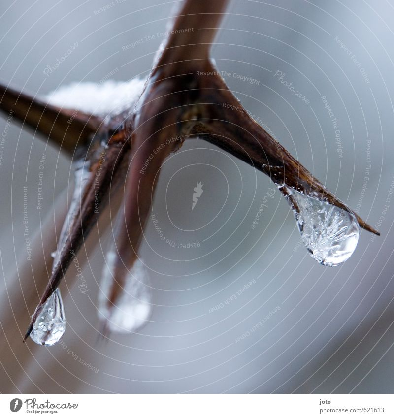 freeze Nature Water Drops of water Winter Ice Frost Snow Cold Wet Point White Power Calm Stagnating Transience Growth Natural phenomenon Thorn Bushes Branch
