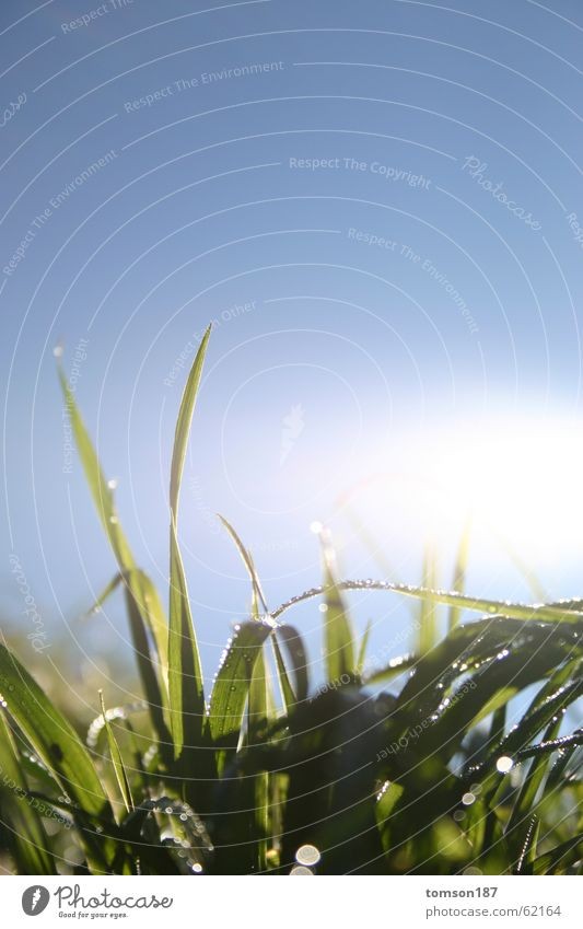 early morning Meadow Summer Drops of water Sun Rope Dew