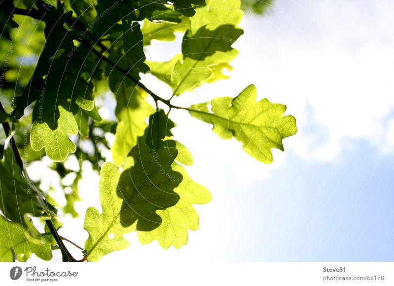 Sun Above Summer Clouds Green Leaf Light Air Goof off Blue Nature Branch Freedom